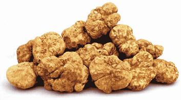 http://www.winecountry.it/assets/articles/tartufo/whiteTruffles.gif