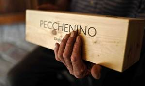 Image result for Pecchenino